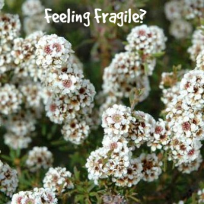 fragonia-feeling fragile