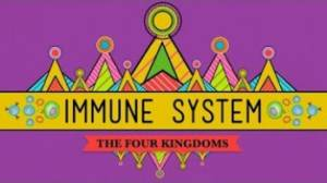 immune-system-at-80